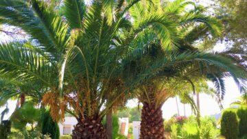 Palmsonntag – Freiheit in den Umständen
